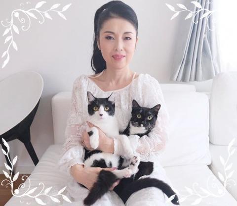 藤あや子と猫
